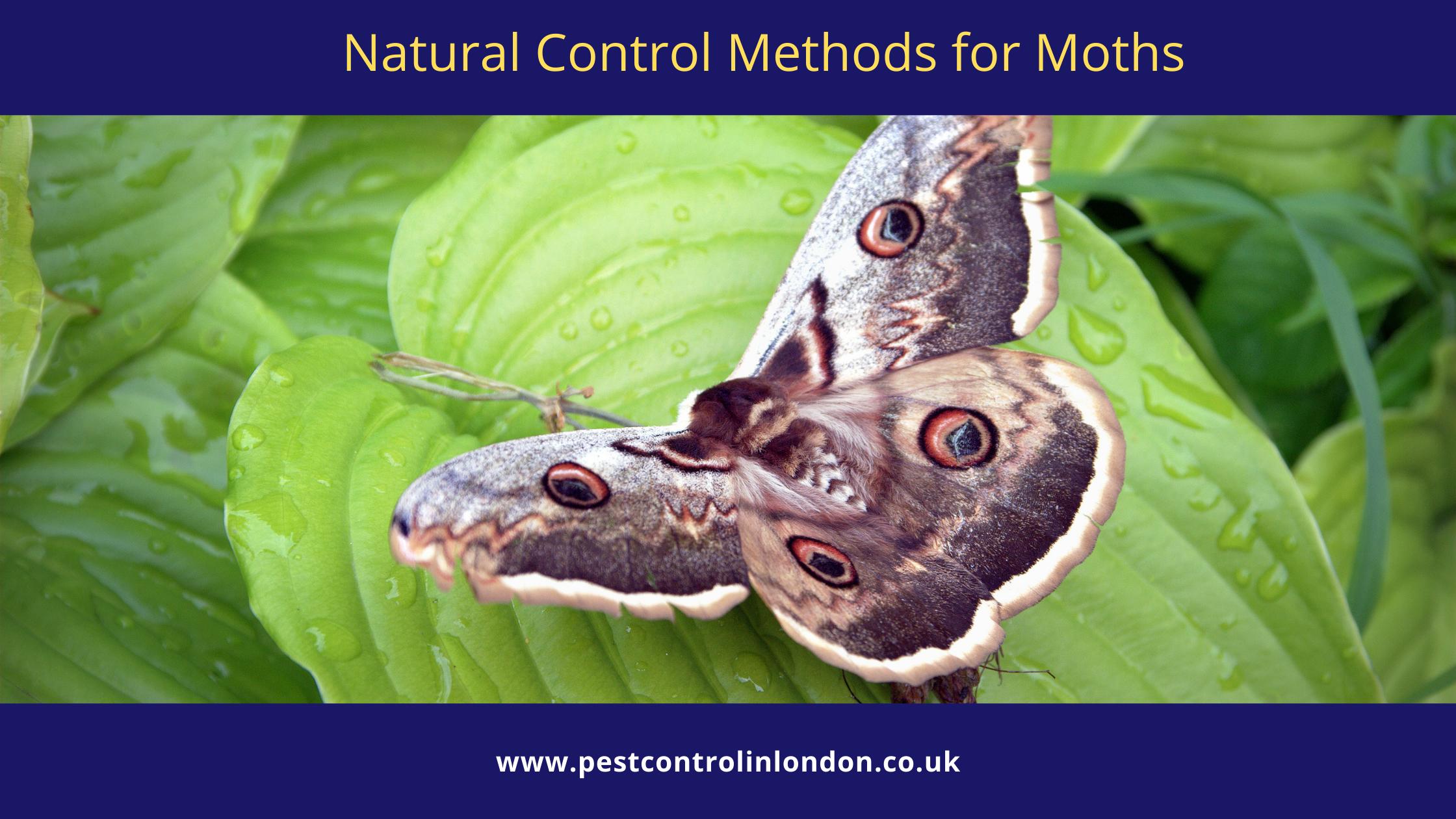 Natural Control Methods for Moths