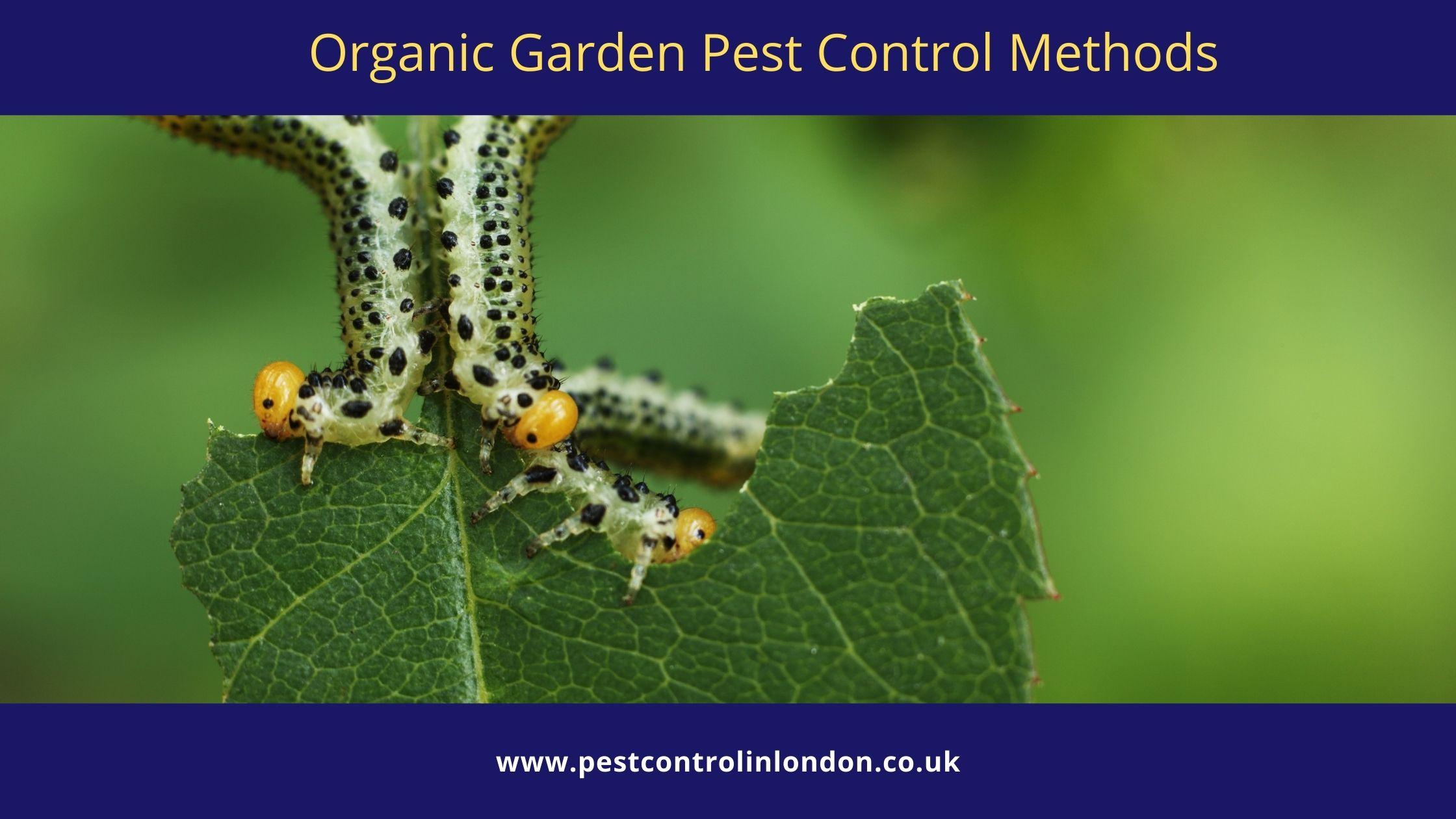 Organic Garden Pest Control Methods