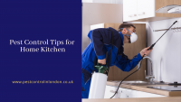 Pest Control Tips for Home Kitchen
