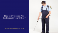 How to Overcome Pest Problems in your Office