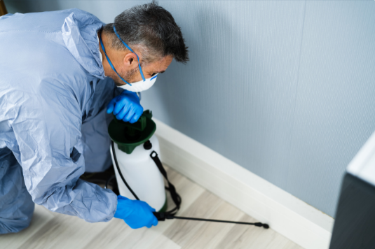 How to treat Pest Problems in your Office