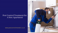 Pest Control Treatment for A New Apartment