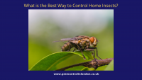 What is the Best Way to Control Home Insects