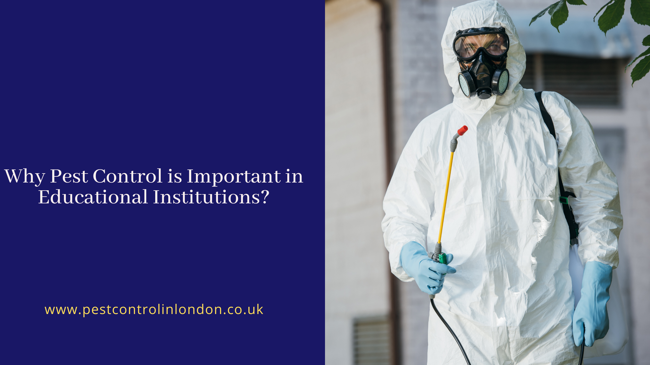 Why Pest Control is Important in Educational Institutions