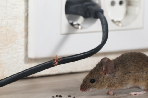 natural methods to control the presence of mice