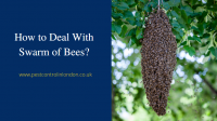 How to Deal with Swarm of Bees
