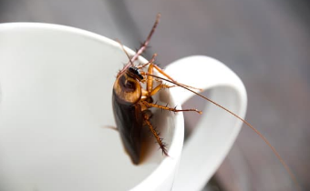 Things you did not know about cockroaches