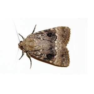 Moth Control in London