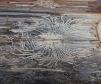 wood with woodworm