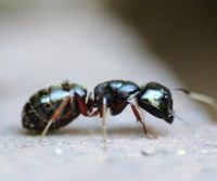 image of an ant